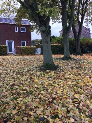 Autumn leaves outside my Uncle's house